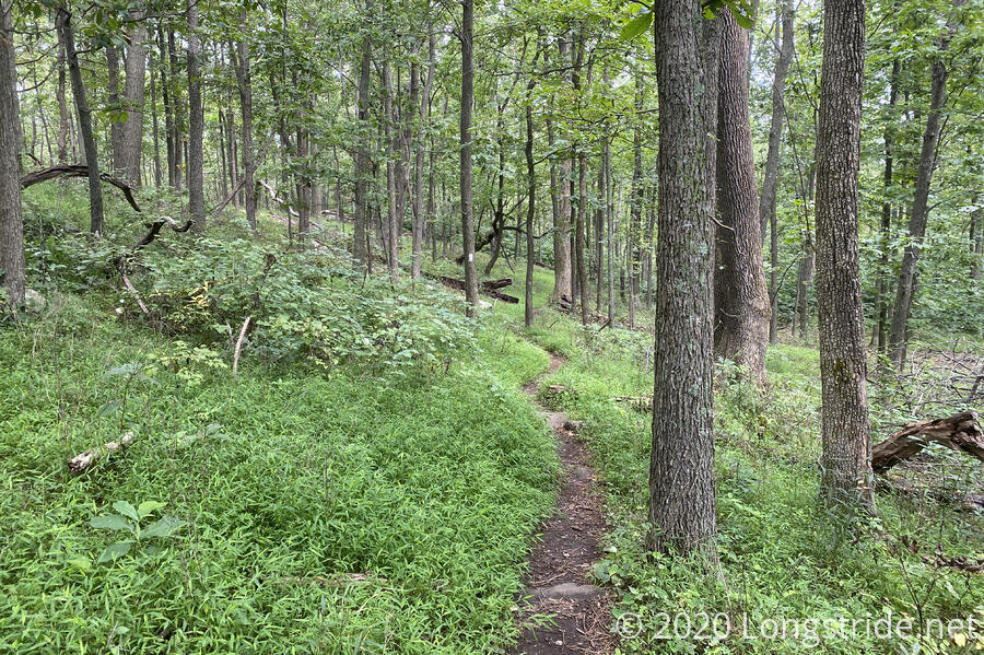A Lush, Green, and Damp Trail