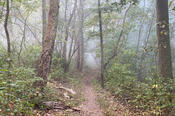 Morning Fog on the Trail