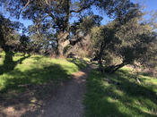 Tree-Lined Trail to Warner Springs